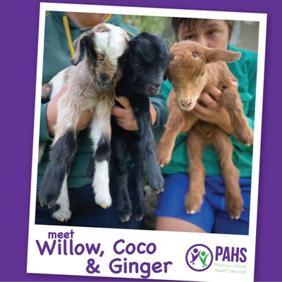 Willow, Coco & Ginger