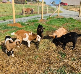 Willow, Daisy, Gary, Ginger and Coco